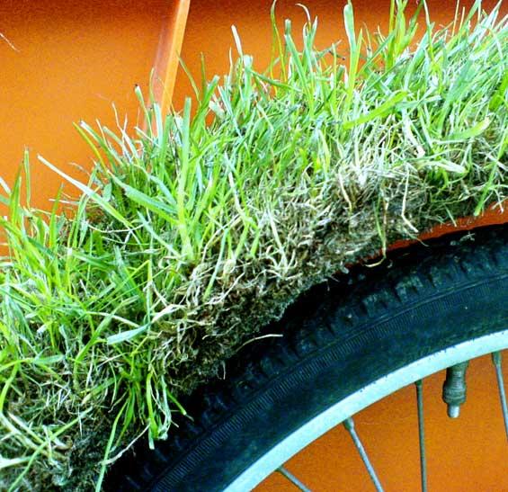 Grass Keeps Growing. Pressebillede.