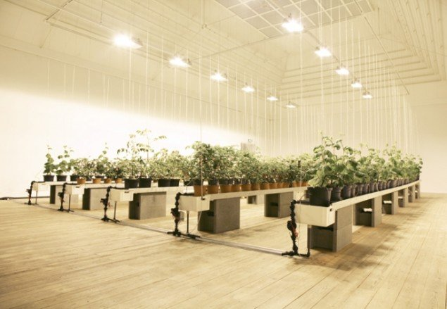 Dahlgaard har omdannet 2 sale i Århus Kunstbygning til drivhuse. Agurke-, tomat- og chiliplanter, bier, rovmider, vandingsanlæg med mere. Foto: Søren Dahlgaard