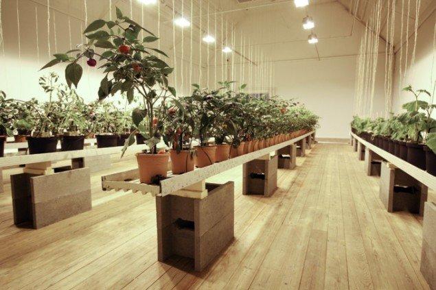 Samtidens grøntsagsproduktion: Growing Vegetables on a Coral Island, 2011, levedygtigt væksthus med vandingsanlæg, gødningsblander, vækstlys, humlebier og planter. Foto: Søren Dahlgaard.