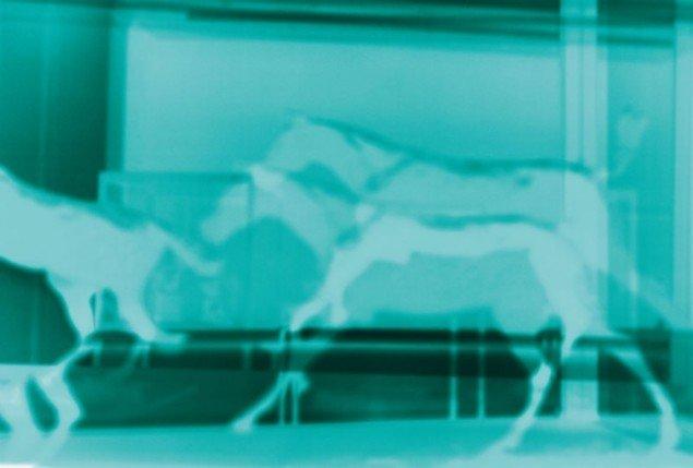 Erik Steffensen: Turqouise horses, 2011. (Pressefoto)