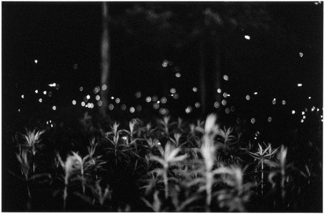 Untitled fra serien Fireflies (Pressefoto)