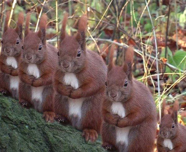 Jesper Carlsen: Squirrels, 2006, manipuleret video, 58 sek. loop. DVD. Pressefoto.
