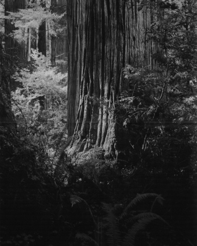 Adam Jeppesen: Xcopy VII, 2011, 42 x 51cm. Pressefoto.