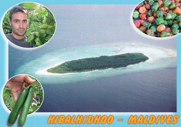 Projekt på Maldiverne. Pressefoto.