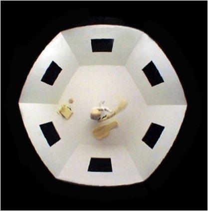 Hexagonal Cyclops fra 2000 er den tredje video i en en triologi, hvor Circular Alteration 1997-98 og Elliptic Touchdown 1999 var de to første. Pressefoto.