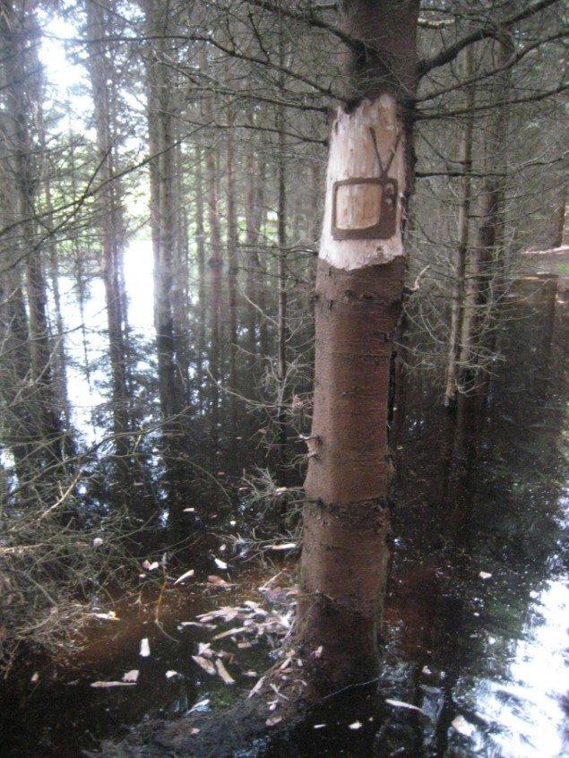 Naturrum Skovsnogen. Søren Taaning: Tree Tags. Foto: Søren Taaning