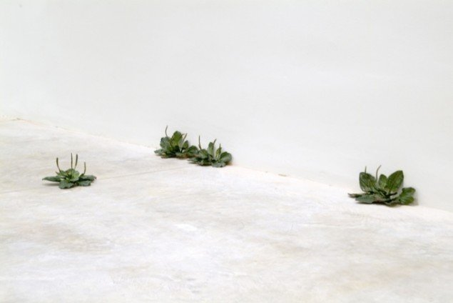 Tony Matelli: Weeds, 2012. Foto: Courtesy Andréhn-Schiptjenko, Stockholm Leo Koenig Inc., New York.
