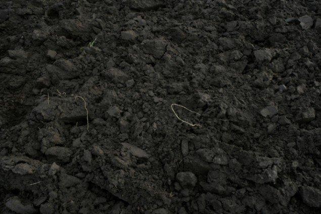 Roots: Foto: Per Bak Jensen