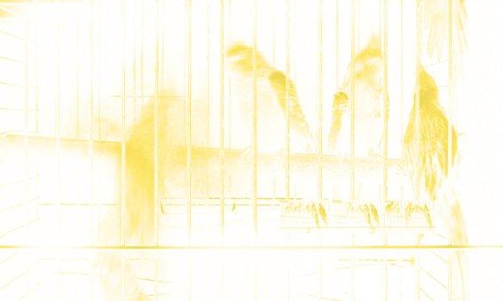 One Hour with Birds, 2003, 178 x 298 cm., edition på 3. Pressefoto.