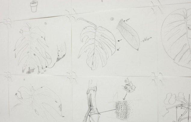 Jesper Carlsen: Study of studio plants, 2012. Pressefoto