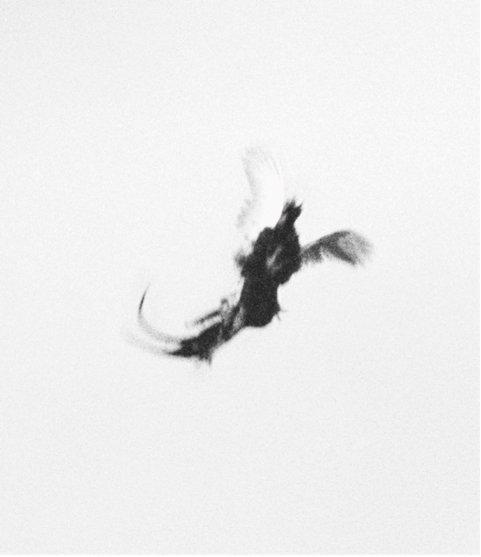 Fra serien Dying Birds. Foto: Nicolai Howalt og Trine Søndergaard, Courtesy Martin Asbæk Gallery