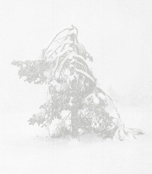 Fra serien Tree Zone Foto: Nicolai Howalt og Trine Søndergaard, Courtesy Martin Asbæk Gallery