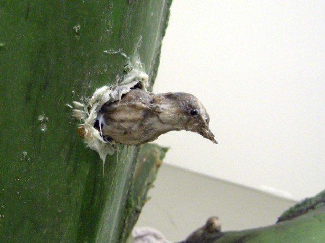 Den store kaktus var beboet af mange små fugle.