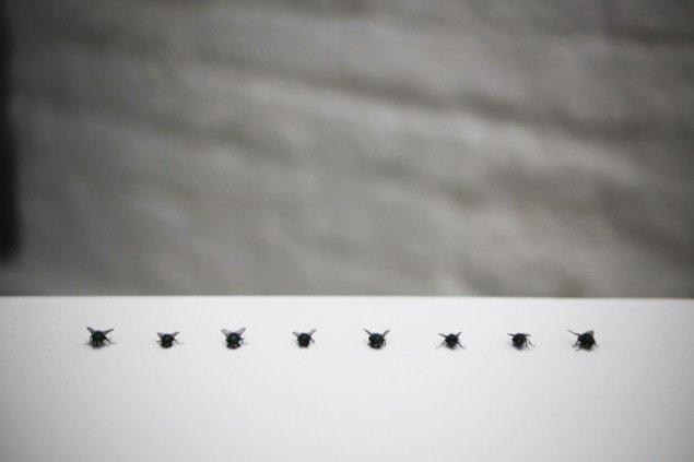 Signe Vad: Ingen titel – blandede medier, 2012, træ, fluer. Foto: Signe Vad