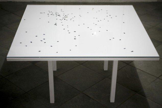 Signe Vad: Ingen titel – blandede medier, 2013, træ, glas, fluer. Foto: Signe Vad