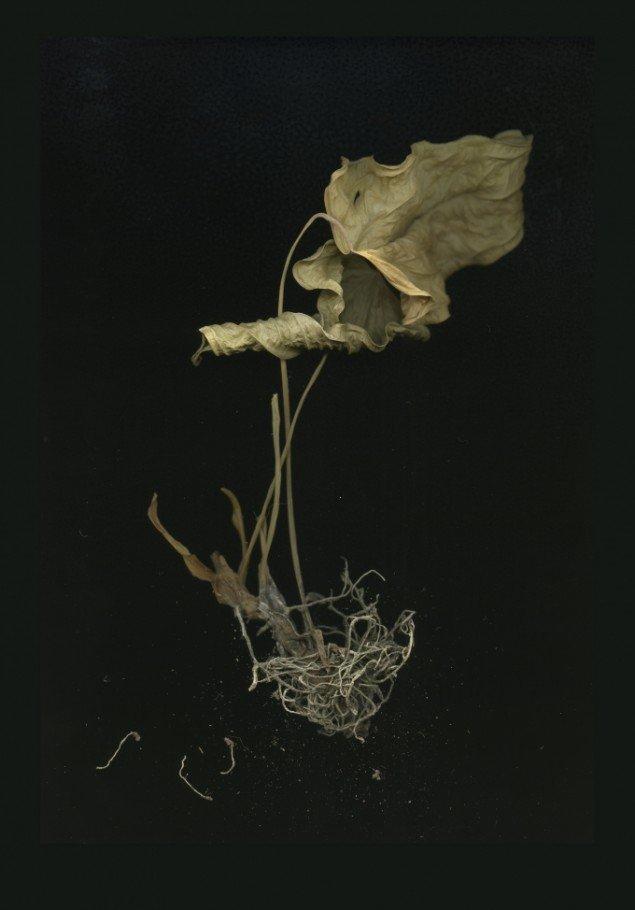 Plante, 700x1000mm, 2013. Foto: Camilla Rasborg