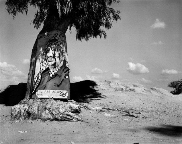 Henrik Saxgren: Arafat på træ, Gaza, 2001