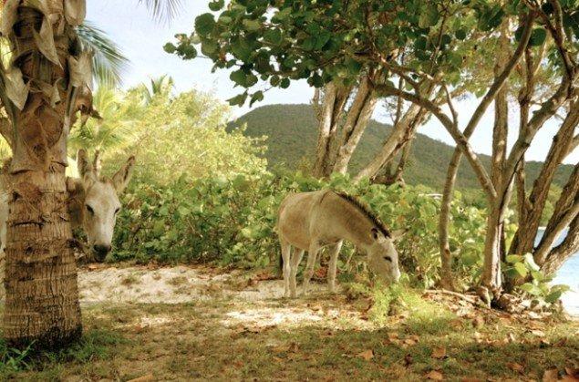 Nanna Debois Buhl Donkey Studies # 2 2008, C-print, 90 x 59,5 cm