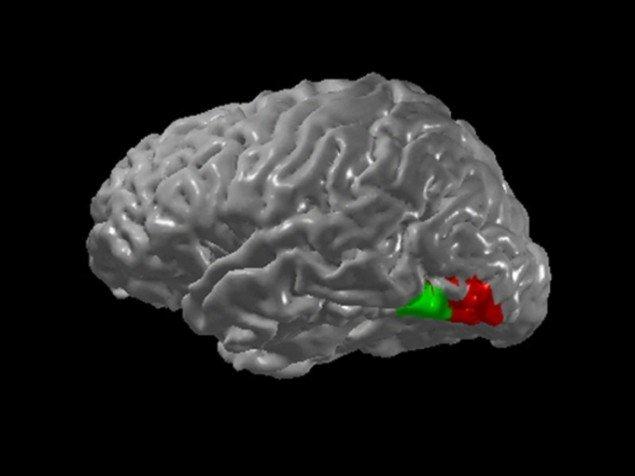 En illustration af de centre i hjernen der registrerer dels farver og grafiske figurer. (fra wikipedia om synæstesi)