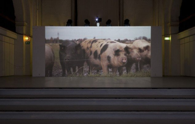 Installationsview, High on Hogs, 2013. (Foto: Lea Nielsen)