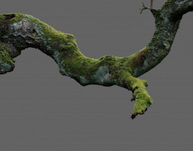 Morten Barker: Betula pendula No. 1 2013, 140x110 cm, 3mm dibond.