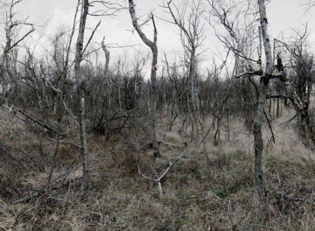 Morten Barker: The Forest No. 1 2013, 150x110 cm, 3 mm dibond.