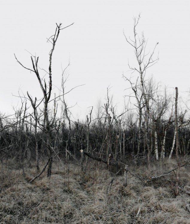 Morten Barker: Dendrocopos major 2013, 200x170 cm, 3 mm dibond.