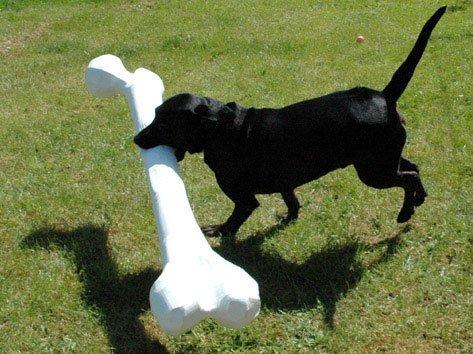 Lykken for en labrador. Foto: Søren Behncke.
