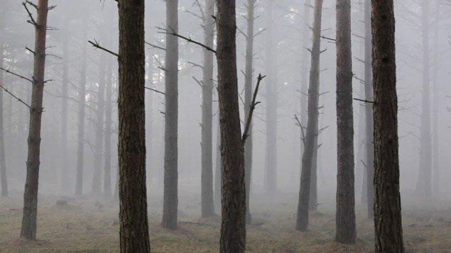Videostill fra endnu ufærdigt videoværk fra skoven ved Myrtuen, Esbjerg. Foto: Morten Barker