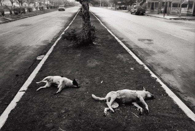 Henrik Saxgren: Carretera del Norte, Nicaragua, 1998/2000. På Ordinary People, Banja Rathnov Galleri & Kunsthandel. Foto: Courtesy af udstillingsstedet