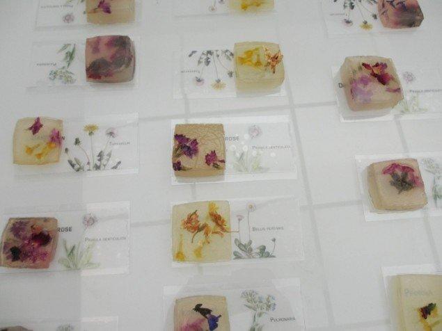 Blomstergeléen serveres på skilte, der fortæller hvilken blomst, man spiser. Foto: Kirstine Bruun