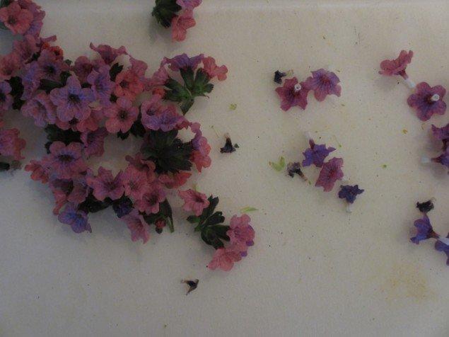 Blomsterne skal nippes i passende stykker til geléformene og stilken fjernes. Foto: Kirstine Bruun