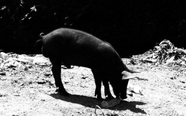 Jeannette Ehlers: Videostill fra OFF THE PIG, 2012