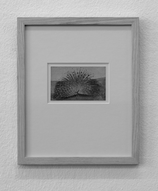 Jacob Borges: Small Black and White Peacock, 2011. Foto: Anders Sune Berg.