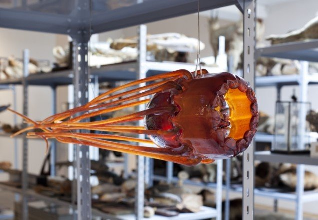 Tue Greenfort: Periphylla periphylla, 2014, En visuel repræsentation af dybvandsgoplen Periphylla periphylla i glas, der har spredt sig eksplosivt i norske fjorde. Foto: Léa Nielsen