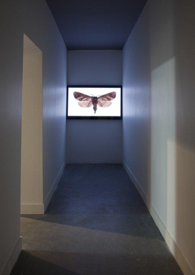 Tue Greenfort: Der er ikke én frø, der er ikke én fugl, der er ikke én fisk. Slides med uddøende arter, 2009/2014. Foto: Léa Nielsen