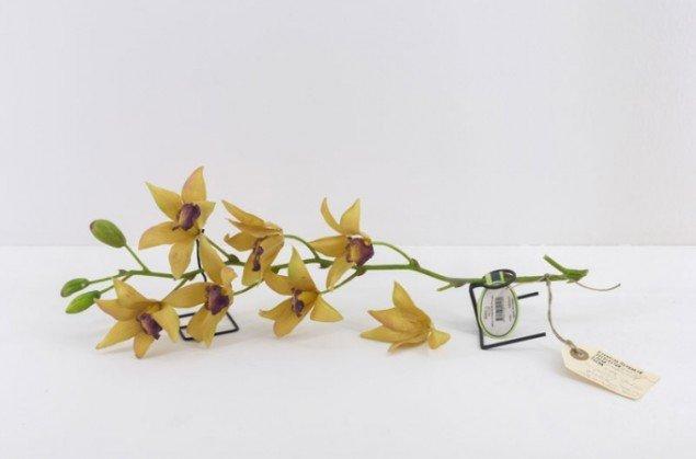Alberto Baraya: Expedition Berlín, Herbarium of Artificial Plants, 2013–. Courtesy Alberto Baraya; Galeria Nara Roesler, São Paulo. (Foto: Anders Sune Berg)