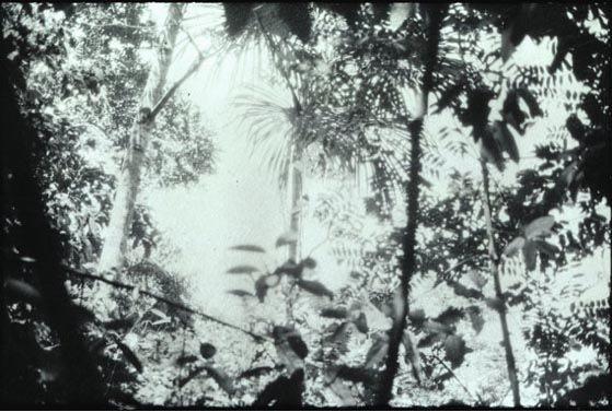 Luzia Simons, Landscape No. 1, 2013, monokrom A1A overførselstryk, indrammet. Foto: Studio Luzia Simons.