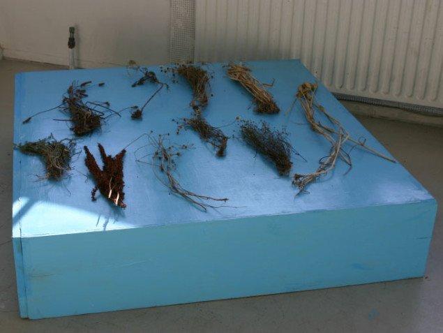 Anne-Mette Arendts værk I begyndelsen var opdragelsen består af tekster, model og indsamlede planter, der behandler barndommens oplevelser på Hven. Foto: Anja Møller Pedersen