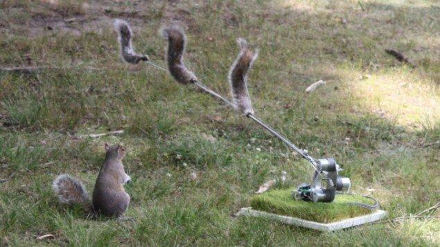 Ian Ingram: Danger, Squirrel Nutkin!, 2009.  (Foto: Kuan-Ju Wu)