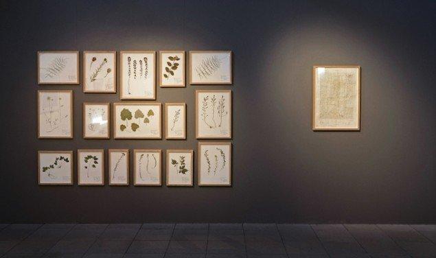 Installationsview af 16 Herbarium værker i varierende størrelser samt Topografisk kort, Pridejor, et hemmeligt militærkort. Fra udstillingen Negatives Beyond the Green, 2015, Kunstpakhuset, Ikast. Foto: Ismar Cirkinagic
