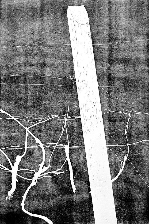Anne Skole Overgaard: Træer, 2015, træsnit. Foto: Anne Skole Overgaard