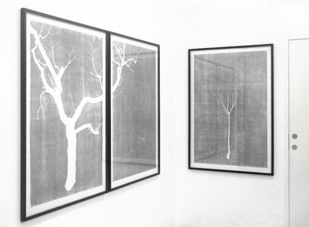 Installationsview: Anne Skole Overgaard: Træer, 2015, 3 træsnit. Gallery Hjorth, Horsens til 21/3, 2015. Foto: Anne Skole Overgaard