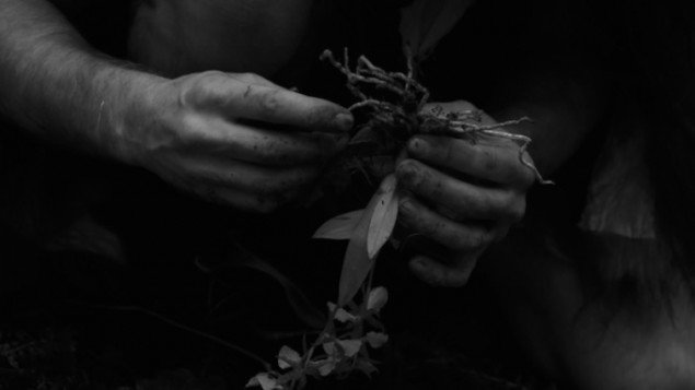 Origin of Specimen 52v, 2013. Video still