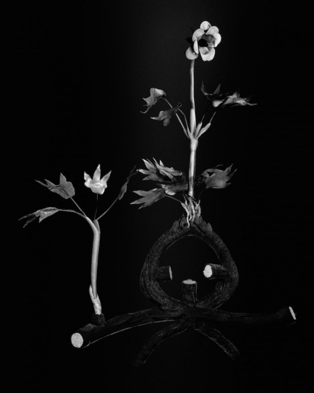 Ulrik Heltoft & Miljohn Ruperto: Voynich Botanical Studies, Specimen #52r Podzim, 2013