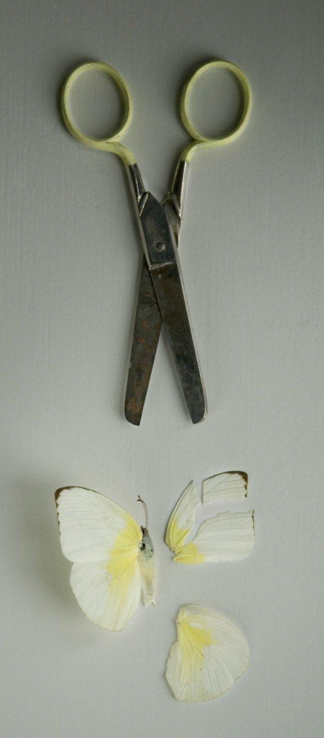 Sommerfuglesaksen, 2007. Fotografi