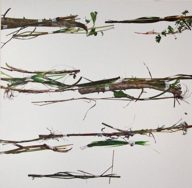 Jan Skovgaard: fra serien RE-weed, detalje, 2012. Foto: Else Ploug Isaksen