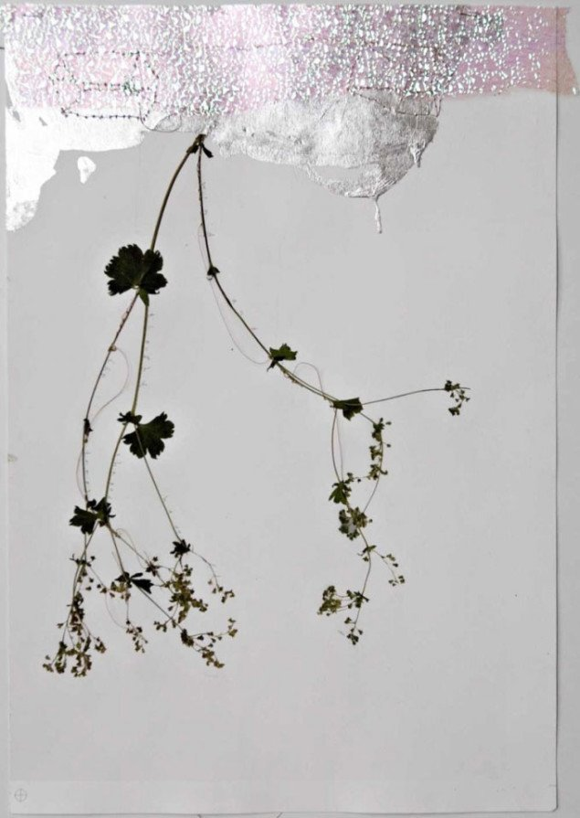 Wind and thoughts have shaped the trees II, Martin Erik Andersen, 2008, Foto: Martin Erik Andersen, Courtesy Galleri Susanne Ottesen