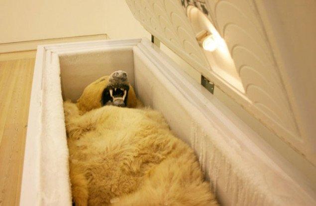 Husk at åbne kummefryseren og hilse på Isbjørn. Foto: Bonnie Bay Andersen