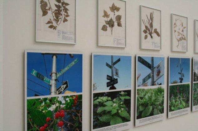 Jef Geys installation i den Belgiske Pavillon. Foto: Sixten Therkildsen